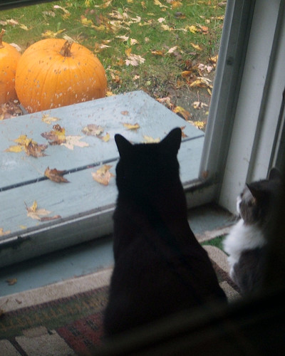 watching fall