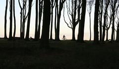 Long day's journey into night (Ocloclop) Tags: trees bike ostsee soe bythesea northerngermany gespensterwald ocloclop ramblingcopse