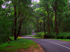 Athirappilly - Vazhachal Road (shaji sarasan) Tags: road nature kerala waterfalls vazhachal athirappilly athirappally