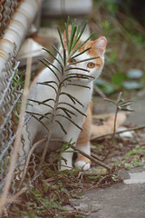 hide and seek (fjny) Tags: cute cat taiwan hideandseek explore  notmycat   mywinners kissablekat