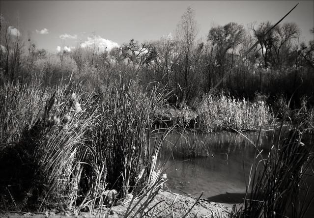 Dead Horse Ranch, Reeds