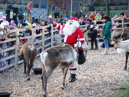 Santa Claus feeding his reindeer at Edinburgh's Reindeer garden