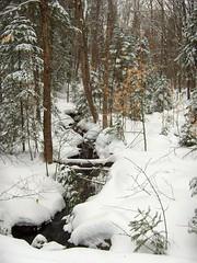 ski_scenery