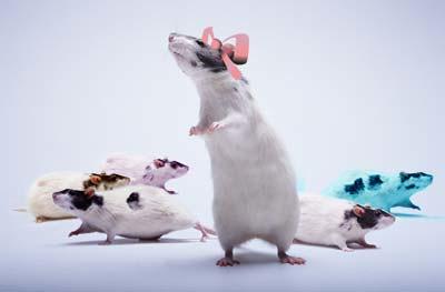 Ratas o ratones en sueños