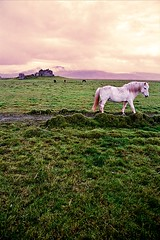 A white hourse (tigric (Ana Stefanovi)) Tags: old autumn panorama horse white house abandoned nature river landscape countryside iceland farm empty september deserted hourse anastefanovic