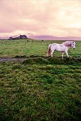 A white hourse (tigri) Tags: old autumn panorama horse white house abandoned nature river landscape countryside iceland farm empty september deserted hourse anastefanovic