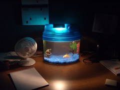 Casey's Fish