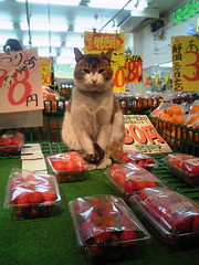 本日の売上NO.1店員猫 (otarako☺︎) Tags: japan saitama 近所 イチゴ 八百屋 商店街 kitaurawa 買って行ってや お安くしときます おいでやす 明日も売るわよ