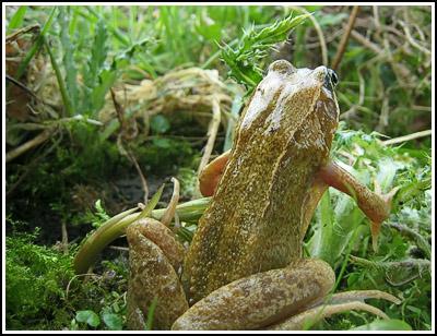 Froggie3 copy