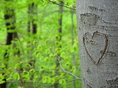 Gnarly love (**MIKA**) Tags: canon biodiversity g7 powershotg7 canonpowershotg7 mikahuettner