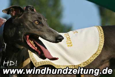 Greyhound_R_HD080500