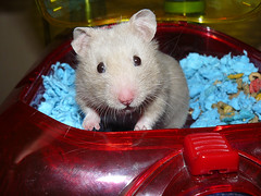 11-11-07 New Hammy 1