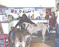 Excalibur & Napoleon with Kathy (muslovedogs) Tags: dogs mastiff kathy napoleon excalibur mastweiler myladyoffspring