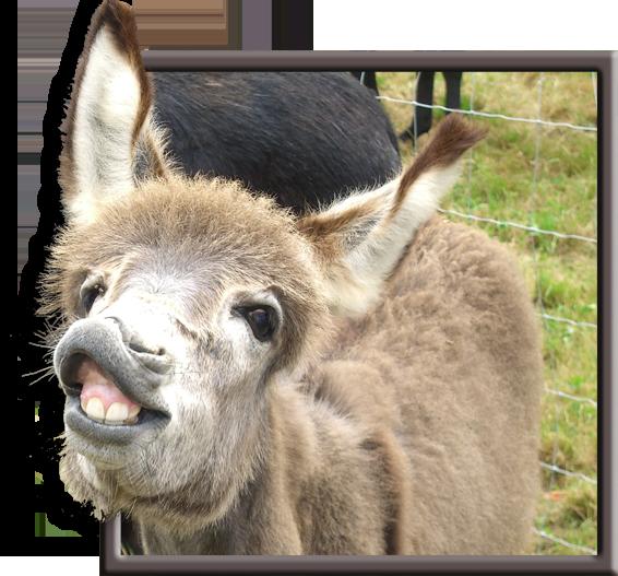 Donkey Frame Break