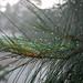 BTFP: Wet summer