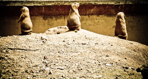 Archives Baltimore Zoo_Standing Guard