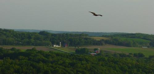Eagle Soars Over Lodi