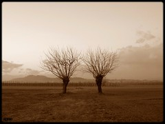 They come a single time (Shima Hitotsu) Tags: trees winter italy sepia rural landscape friuli naturesfinest cormons platinumphoto aplusphoto diamondclassphotographer