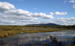 marécage (Guylaine2007) Tags: lake canada nature landscape quebec lac québec granby paysage campagne marécage photoquebec lysdor