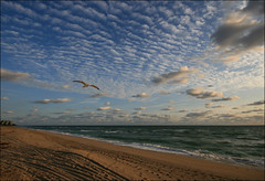 Altocumulus Glide, Jupiter, Florida (s0ulsurfing) Tags: ocean morning blue light sea sky usa cloud sun sunlight seagulls seascape bird beach nature water beautiful weather birds clouds composition america sunrise wow wonderful dawn coast interesting sand skies natural bright wind florida patterns gull gulls awesome unitedstatesofamerica flight wide shoreline january tracks footprints fluffy wideangle explore coastal american shore tropical getty coastline jupiter gliding 2008 fla tropics nube soar sunup daybreak meteorology southflorida nephology altocumulus glide 10mm undulatus sigma1020 supershot s0ulsurfing altocumulusundulatus aplusphoto