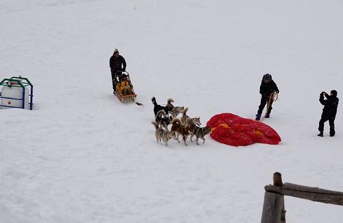 dog sled arrives