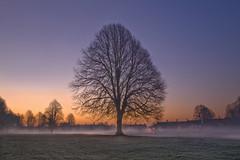 Misty Dawn (wentloog) Tags: park mist tree fog wales night sunrise canon eos dawn interestingness cardiff 5d wfc llandaff pon