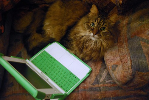 One Laptop Per Cat
