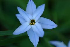 8枚の花弁