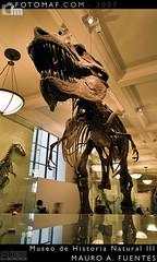 Museo Historia Natural 3