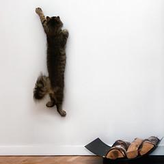 [フリー画像] 動物, 哺乳類, 猫・ネコ, 子猫・小猫, 跳ぶ・ジャンプ, 201105031100