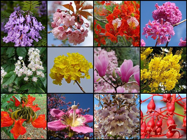 Most beautiful flowering trees (close-up)