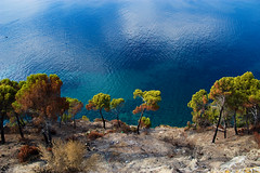 nearly burnt (Philipp Klinger Photography) Tags: sea tree water pine burnt soe shieldofexcellence diamondclassphotographer flickrdiamond dcdead