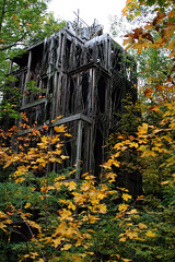 Six Story Tree House