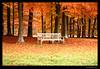Garden Bench in Autumn Scenery (Wiljo Meijnhout) Tags: wood autumn nature forest garden bench scenery herfst natuur 100v10f bos baarn tuinbank amazingtalent 35faves 25faves abigfave theexhibit platinumphoto goldenphotographer diamondclassphotographer amazingamateur naturewatcher colourartaward platinumheartaward thegoldenmermaid theperfectphotographer top20autumn top20autumn20 obq inspiredbyyourbeauty