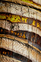 Detail of a Palm Tree (Peggy_G) Tags: california detail macro tree palm impressedbeauty impressedbyyourbeauty