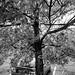 Day 323: Tree