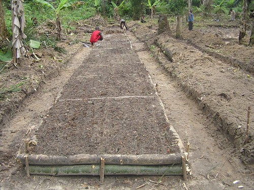 There will be a total of 150 of these plots full of plants soon all growing food for the benefit of Obenge and to help reduce their reliance on bushmeat