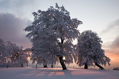 violet snow (Mace2000) Tags: trees winter light sunset sun snow nature clouds germany landscape deutschland shadows natur 5d landschaft schwarzwald blackforest schauinsland mace2000 img0653 countryscenery