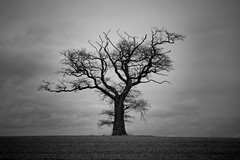 The Old Man Stands Alone (Steve Green) Tags: blackandwhite bw tree shropshire telford lonely vignette canonef24105mmf4lisusm treesubject bigpicture2008