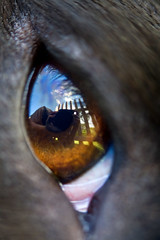 The World, As a Dog Sees It (norbography) Tags: macro reflection eye monty 100f28 toddnorbury wwwpopular favewww