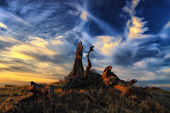 cirrus clouds above deadfall (Marc Crumpler (Ilikethenight)) Tags: california trees sunset usa clouds canon landscape searchthebest hiking trails hills bayarea eastbay cubism ebrpd roundvalley firstquality photomatix contracostacounty eastbayregionalparkdistrict flickrsbest hdrsoft tamron1750 golddragon sfchronicle96hours 40d ebparks platinumphoto impressedbeauty superaplus aplusphoto holidaysvacanzeurlaub diamondclassphotographer flickrdiamond bratanesque ishflickr focuslegacy onlythebestare canon40d photofaceoffwinner platinumheartsaward elitephotography betterthangood theperfectphotographer goldstaraward superstarsofplatinumphotography platinumsuperstar spiritofphotography alemdagqualityonlyclub bestofflickrsbest flickrlovers aphotocontest34 amazingskyscapes ilikethenight marccrumpler ebparksok