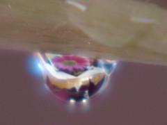 Gerber Daisy In A Drop (audreyjm529) Tags: pink macro rain drop refraction daisy raindrop gerber macroisbeautiful