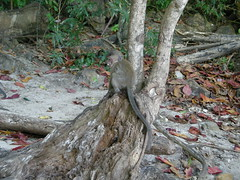 46 scimmia a monkey beach