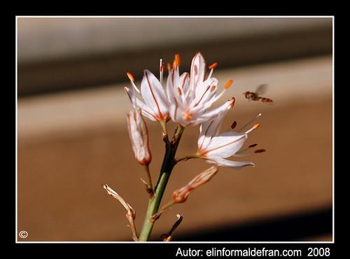 Insecto y flor 2