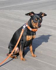 城南島海浜公園と犬