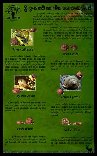Land snails of Sri Lanka