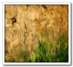 Against A Wall (Finntasia old) Tags: grass wall flora soft chapeau rough delicate simple blades wispy platinumphoto anawesomeshot diamondclassphotographer finntasia goldstaraward vanagram nigelfinn