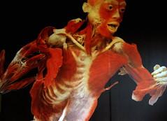 Bodies, the exhibition