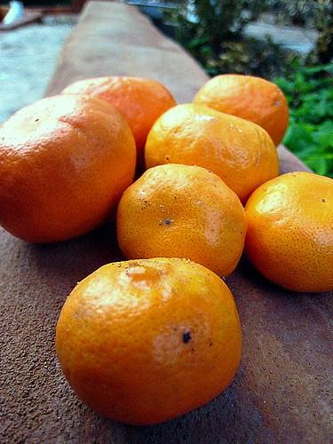 Tangerines (iii)