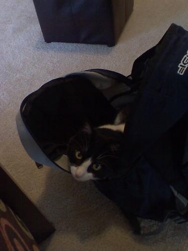 tinainbackpack